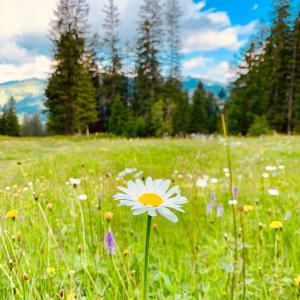 ベートーヴェン「交響曲第6番『田園』」【クラシック音楽を楽しむ3つの方法】