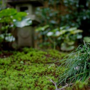 京都花园的四个季节               【京都の庭の四季】