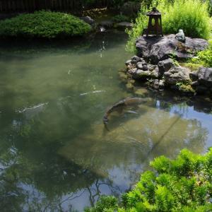 並河靖之七宝記念館の庭園 【并河靖之七宝纪念馆的花园】