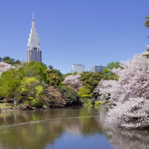 Shinjuku Gyoen is the oasis in the city center of Tokyo