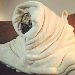 冬支度。Bed Bath&Beyondの会員になりました