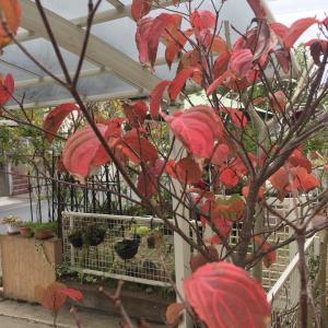 深まっていく秋の庭