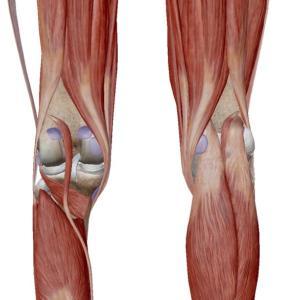 膝の痛みは前側だけじゃない!?