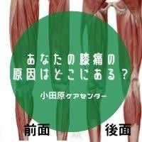 あなたの膝痛の原因はどこにある?
