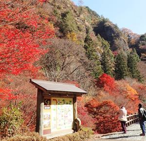 悠久の時を刻む礫岩峰 古岩屋の紅葉