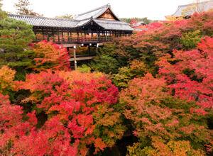 雨がしとしと降る日にあえて行きたい【京都のお寺8選】