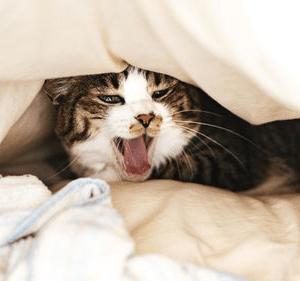 人はこんな時に眠くなる!3種類の本能的な眠気を解決|マクログ