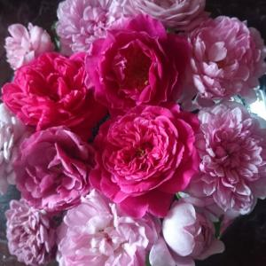 台風前にバラを切りました