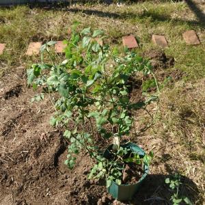 セカンドガーデン~イングリッシュローズ花壇を作る