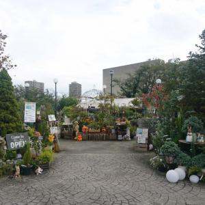寄り道したい園芸店