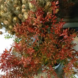 秋のお花屋さん