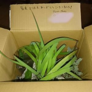 新しく植える宿根草