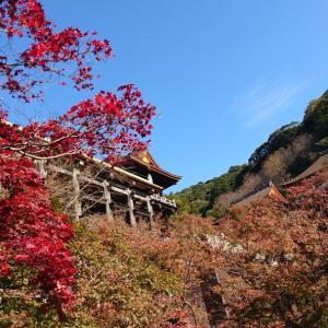 京都の紅葉を見てきました