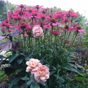 HOTガーデンの花とバラ