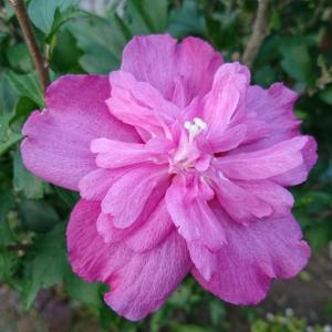 セカンドガーデンの花達
