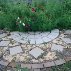 咲いたらスゴいバラ