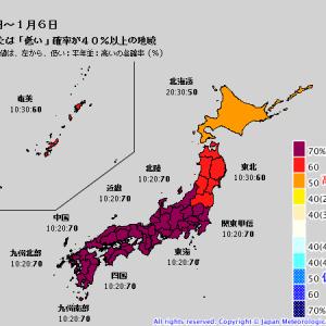 大雪の今日の横浜は、初雪でした