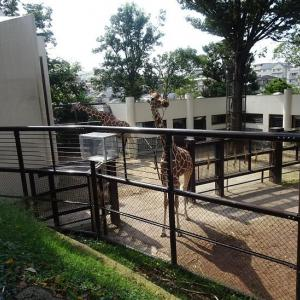 4連休の3日目に、野毛山動物園に行きました