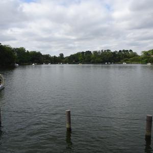 大田区の洗足池公園に行きました。