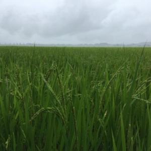 穀雨からの菌活テーマ