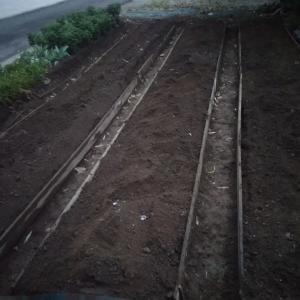 ニンニク栽培の準備 うねづくり