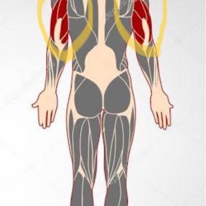 上腕三頭筋に効く効果的で効率のいいトレーニング