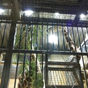 閉園間際の夜の動物園に行ってきました
