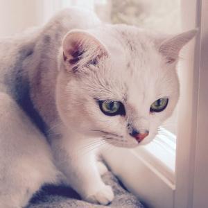 猫背を解消してウェディングドレスを綺麗に着るための簡単ヨガポーズ