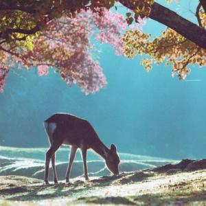 俳句・・・季語「鹿の子」(西嶋先生の句)