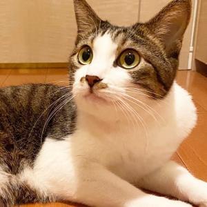 【重要】なぜ三田警察署は「被疑者不詳」なのに色で差別するの?