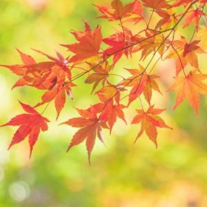 秋の肌ケア