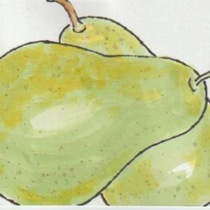 洋ナシの絵手紙1