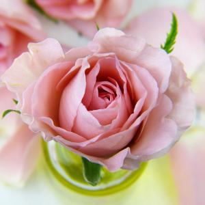 絵手紙の書き方・バラの例