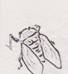 絵手紙 蝉(セミ)の書き方
