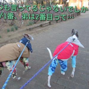 CCボーイズの、運気アップ散歩。