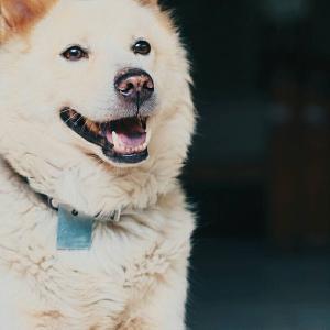 新月の日の不思議な出来事/月に帰った犬