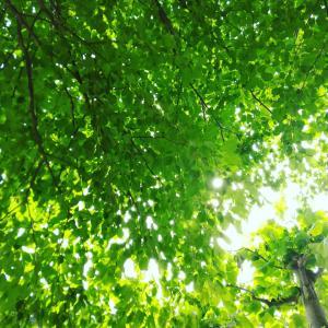 【開運】今日は夏至。陽極まりて陰に転ずる。