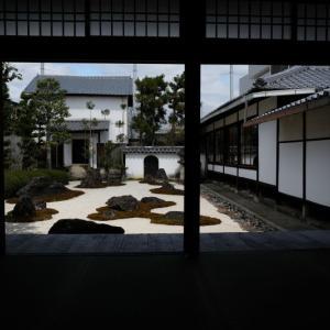 京都洛中の桜 4