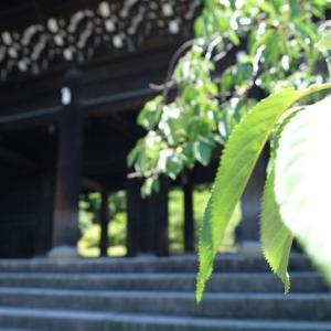 清水寺と知恩院 令和2年6月 -14-