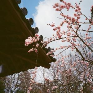嵐山・嵯峨野 冬の風景 フィルムカメラ編 3