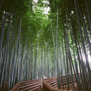 嵐山・嵯峨野 冬の風景 フィルムカメラ編 4