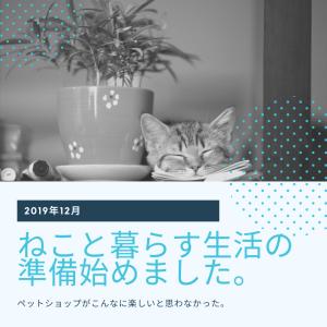 新築の家とねこ 猫が可愛くて死にそう(*'ω'*)
