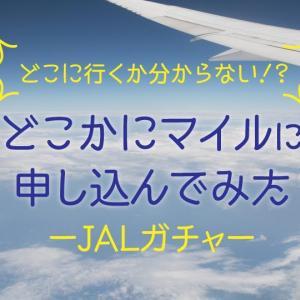 JALのどこかにマイル、申し込み完了〜母子JALガチャ旅へ〜