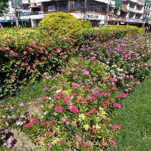 チェンマイは『年中、可憐な花の競演』