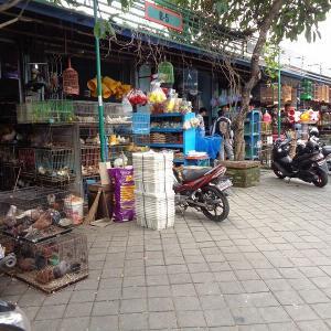 バリ島の旅『デンパサールの鳥市場』