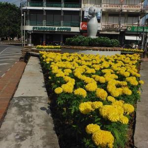 チェンマイは『華麗な花の競演』