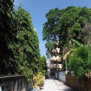 チェンマイ中心街の路地裏の『自然と生き物たち』