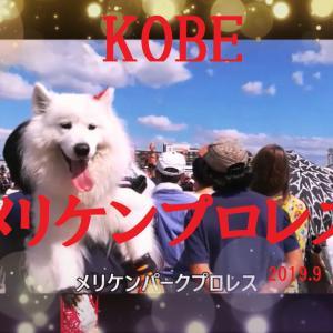 サモエド さくらKOBEメリケンパークプロレス2019 9