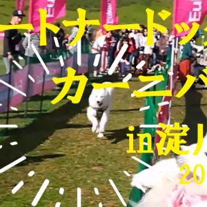 サモエド さくらパートナードッグカーニバルin淀川・西中島2019.11.10