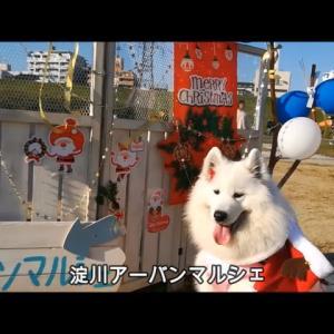 サモエドさくら OSAKA淀川アーバンマルシェ2019.12.1